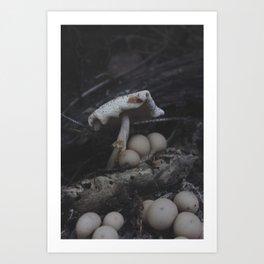 The Mushroom King Art Print