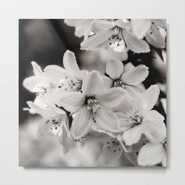 Little Whites ~ No.2 Metal Print