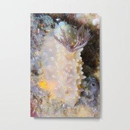 Halgerda Discodoris Nudibranch Metal Print