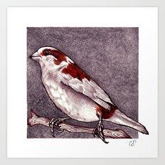 Society Finch Art Print