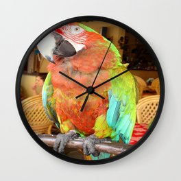 Harlequin Macaw On A Perch Wall Clock