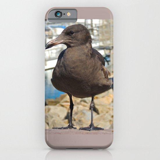 Portrait of a Grumpy Gull iPhone & iPod Case