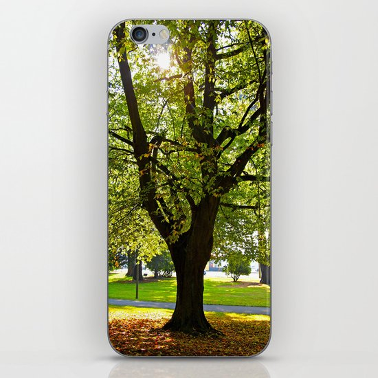 Autumn sun shines iPhone & iPod Skin