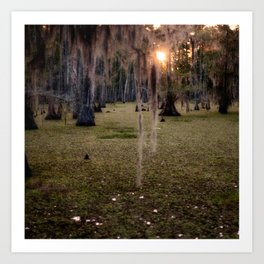 Witch's Hair at Sunrise on the Swamp Art Print