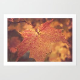 Autumn Bright Art Print