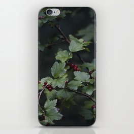 Mountain currant iPhone Skin