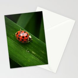 Little Lady Stationery Cards