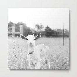 Angelic Baby Goat B&W Metal Print
