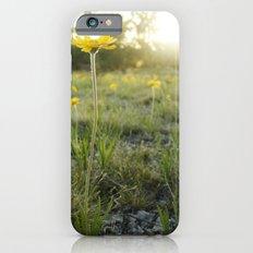 Lakeside Daisy Slim Case iPhone 6s