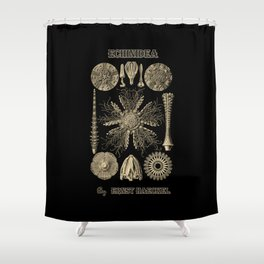 """""""Echinidea"""" from """"Art Forms of Nature"""" by Ernst Haeckel Shower Curtain"""