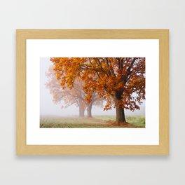 Oaks in the misty Autumn morning (Golden Polish Autumn) Framed Art Print