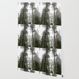 Like The Redwoods - 5/365 Wallpaper