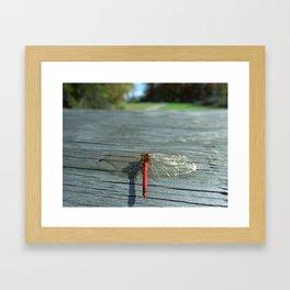 Dragon Fly Ready for Take Off Framed Art Print
