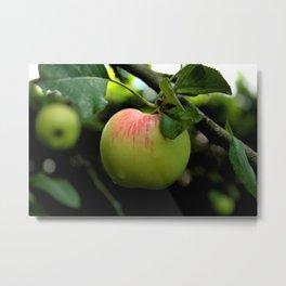 A nice, juicy apple Metal Print
