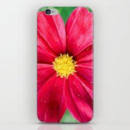 Cosmos Flower in the Garden iPhone Skin