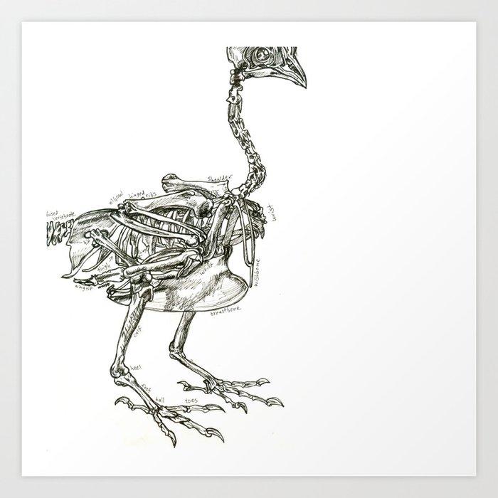 Картинка скелет курицы