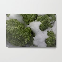 Close up of the frozen branches and leaves of curly kale, leaf cabbage (Brassica oleracea) covered in snow  Metal Print