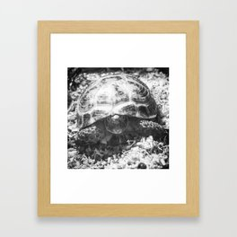 Tortoise at Dawn Framed Art Print