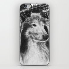 Rough Collie Dog iPhone & iPod Skin