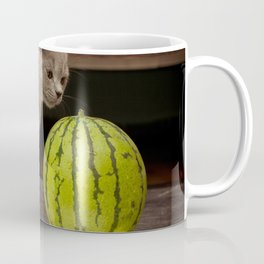 British gray kitten play with a juicy water-melon Coffee Mug