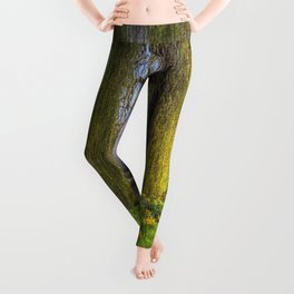 Daffodils and Willow Tree Leggings