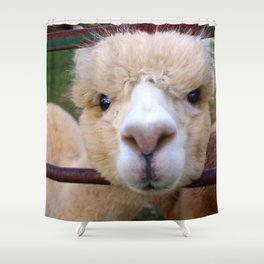 Alpaca Gaze Shower Curtain