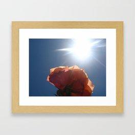 Translucent Rose II Framed Art Print