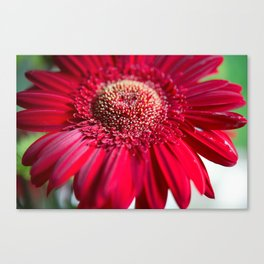 The Red Flower Canvas Print