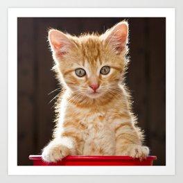 Play Time Kitten  Art Print