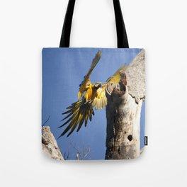 Birds from Pantanal Arara Canindé Tote Bag