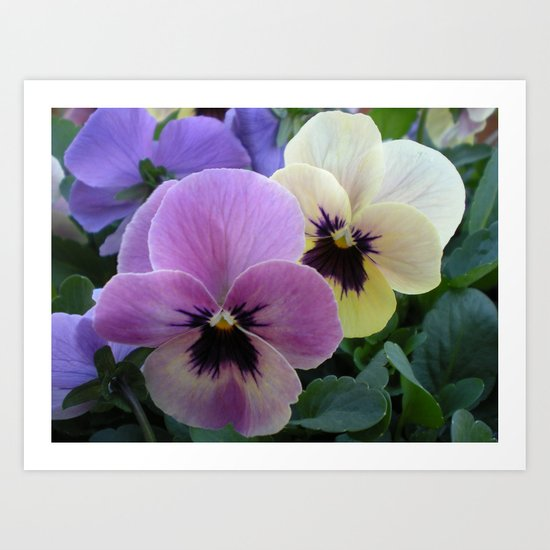 Pretty Pansies Art Print