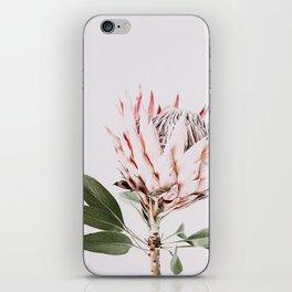 Protea, Flower, Leaves, Plant, Green, Scandinavian, Minimal, Modern, Wall art iPhone Skin