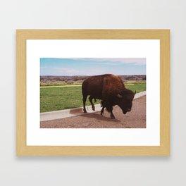 Buffalo Crossing the Road Framed Art Print