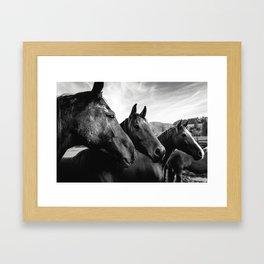 Horse heads Framed Art Print