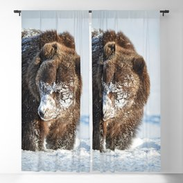Alaskan Grizzly in Snow - 2 Blackout Curtain