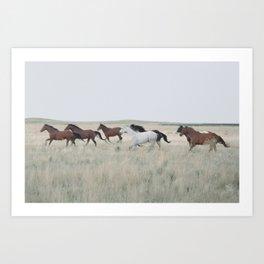colorado horse dreams Kunstdrucke