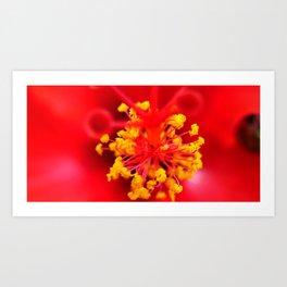 Tropical Hibiscus Art Print
