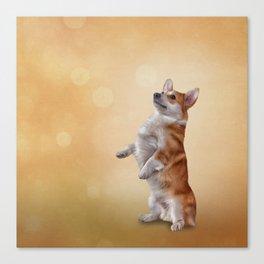 Dog breed Welsh Corgi Canvas Print