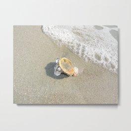 Washed Up Seashell. Metal Print