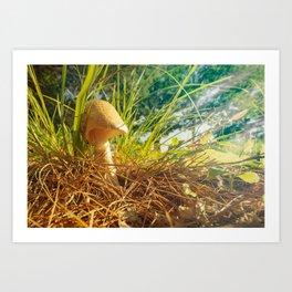 Magic Mushroom  Morning Art Print