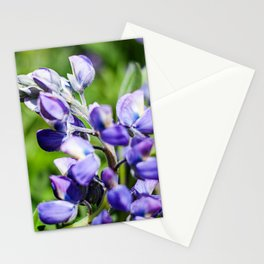 Purple Lupine Photography Print Stationery Cards