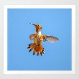 Orange Hummingbird Art Print