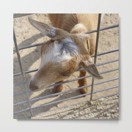 It really gets my goat when all those people stare at me Metal Print