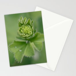 Lady`s mantle is revealing Stationery Cards