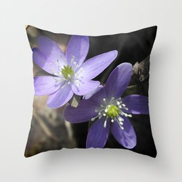 Woodland hepatica, Anemone acutiloba - a sure sign of spring Throw Pillow
