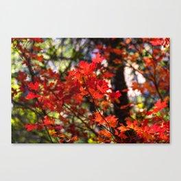 Red Fall Foliage Canvas Print