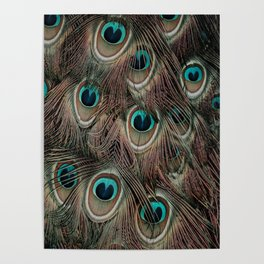 Peacock feathers abstract Poster