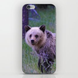 Grizzly bear cub in Jasper National Park | Alberta iPhone Skin