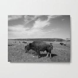 Buffalo Metal Print