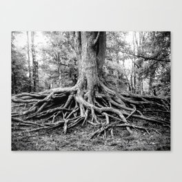 Spread Out, Hold On Canvas Print